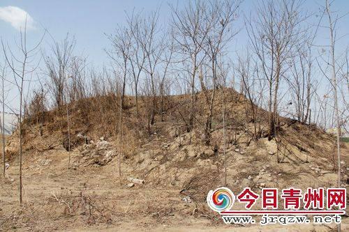 墓顶上长满了酸枣树,荆棘丛生