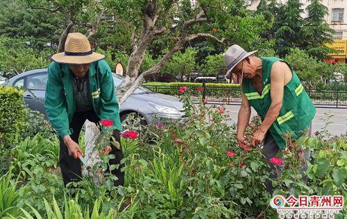 青州市园林局全面提升市容环境迎国家卫生城市复审